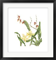 Framed Orchid II (Le)