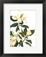 Framed Magnolia I (Le)