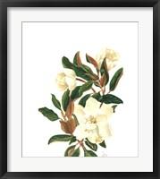 Framed Magnolia II (Le)