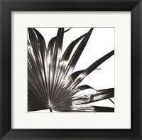 Framed Black and White Palm I