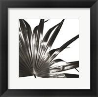 Framed Black and White Palm I