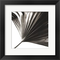 Framed Black and White Palm II
