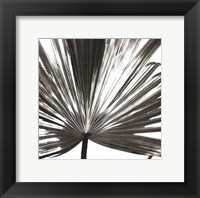 Framed Black and White Palm III