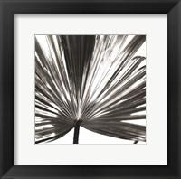 Framed Black and White Palm III