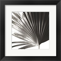 Framed Black and White Palm IV