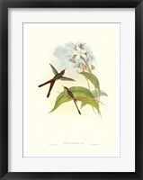 Framed Hummingbird III