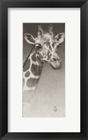 Framed Jean, The Giraffe