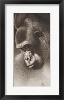 Framed Silver Back, The Gorilla