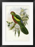 Framed Parrots II