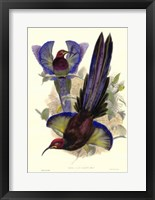 Framed Bird of Paradise III