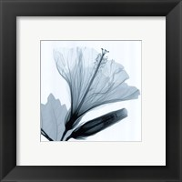 Hibiscus and Bud Framed Print