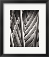 Palm Pattern Framed Print