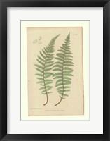 Framed Nature Printed Ferns