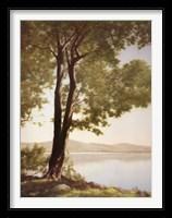 Framed Sunlit Trees I