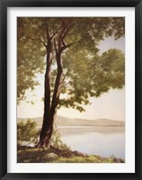 Framed Sunlit Trees I
