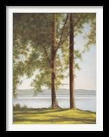 Framed Sunlit Trees II