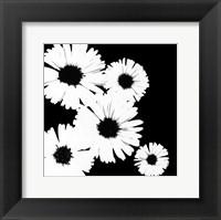 Framed Black/White Asters I