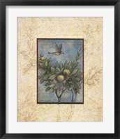 Framed Giardino II