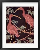 Framed Scarlet Ibis 2