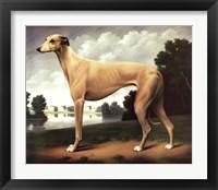 Framed Greyhound in a Parkland Landscape