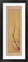 Framed Cherry Blossom II