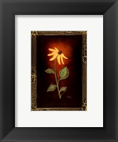Framed Blooming Daisy