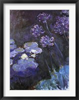 Framed Waterlillies and Agapanthus