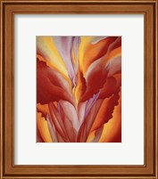 Framed Red Canna