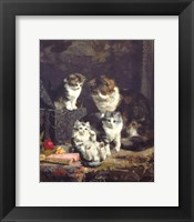 Framed Kittens