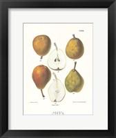Framed Pears IV