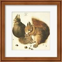 Framed Squirrels