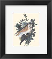 Owl in the Woods Framed Print