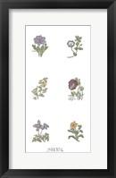 Framed Floral Set (Set of Six)
