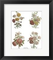 Framed Florals (Set of Four)