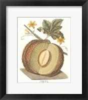 Framed Melon - Sharlyn