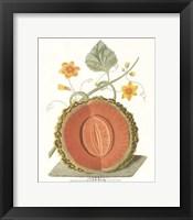 Framed Melon - Cantalope