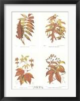 Framed Leaves (Set of Four)