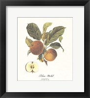 Framed Apple/Blanc-Michel