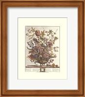 Framed February/Twelve Months of Flowers, 1730
