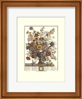 Framed November/Twelve Months of Flowers, 1730