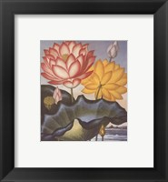 Framed Sacred Egyptian Bean