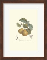 Framed Pears/Imperiale