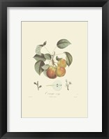 Framed Pears/Orange Rouge