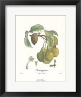 Framed Pears/Frangipane
