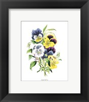Framed Flowers (Untitled) - Bouquet of Pansies