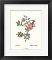 Framed Roses VI