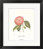 Framed Camellia Wadu