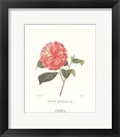 Framed Camellia Goubernativa