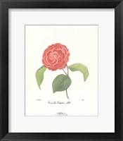 Framed Camellia Campsii Alba