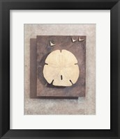 Framed Seashell Study I